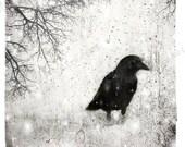 Digital Crow Download, Blackbird, Raven, Digital Photo, Bird Collage, Bird Photography, Winter Photo, Photo Art, Printable Wall Decor, Goth