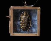 Beetle Reliquary