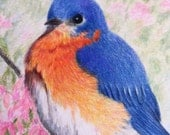 Fat and Fluffy Blue Bird Colored Pencil Drawing