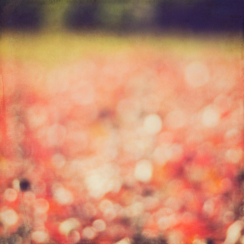 Autumn Red Bokeh Field Kansas Landscape Fine Art Photos 8x8 photo Gallery32