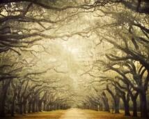 Popular Items For Tree Art On Etsy