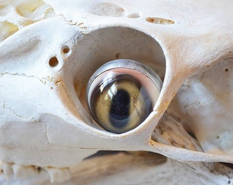 Fall Deer Eye Ring Made With Handmade Taxidermy Glass Eye