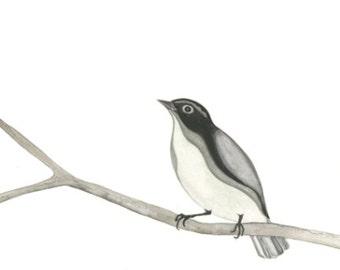 Gray Bird // archival print