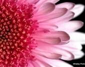 pink flower wall art, pink flower photo, girls room decor, nursery art, floral decor, pink floral art