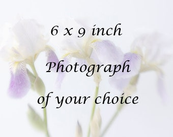 6 x 9 or 6 x 6  inch Print, Photograph of Your Choice