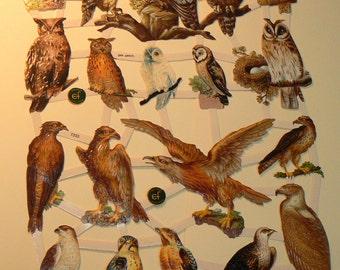 Owls scrap, die cut paper 7333