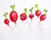 Origina lWatercolor Painting / Fresh Radishes Artwork / Kitchen wall decor color feild red / Home and living Vegetable garden Home Decor K