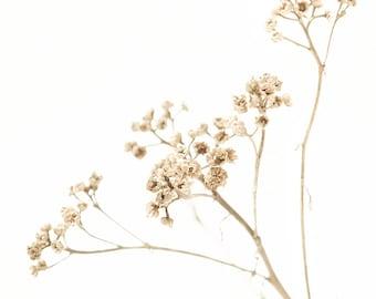 Winter white, tan, brown, wild flowers, white wedding, neutral, snow, white, beige, modern decor, cottage, cabin, straw, simplicity, nature