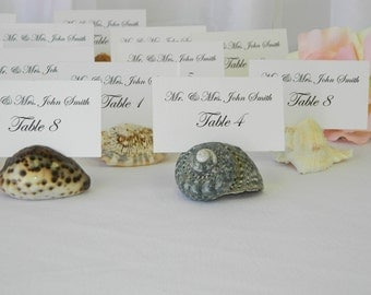 Beach Wedding Assorted Natural Shell Place Card Holders- (Set of 100) ON SALE