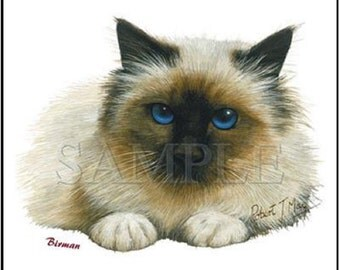 CAT, BIRMAN on TWELVE 6 inch Identical Fabric Squares to Quilt and Sew. White background.
