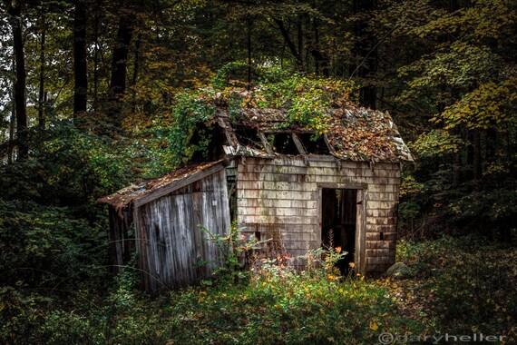 Vieille rustique abandonn e cabane dans les bois pendant la for Acheter cabane dans les arbres