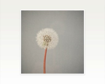 CLEARANCE SALE! Nature Photography, Grey and White Dandelion Clock Photo, Minimalist, Simple Wall Art - The Passing of Time