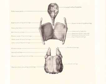 1899 Human Anatomy Print - Larynx - Vintage Antique Medical Anatomy Art Illustration for Doctor Hospital Office