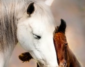 Equine Themed New Year/New Beginning Greeting Card Set, Tenderness