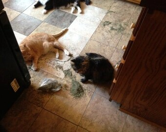 Sample Size of Catnip