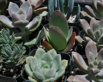 Succulent Plant Reservation - Reserve Succulents for Your Event