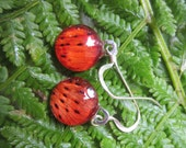 Tiger Lily Petal Earrings.  Petals behind One half Inch glass round.  Real petals behind glass.