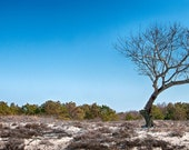 Lone Tree, Ireland - Panoramic Wall Canvas - Fine Art Photography - Wall Art