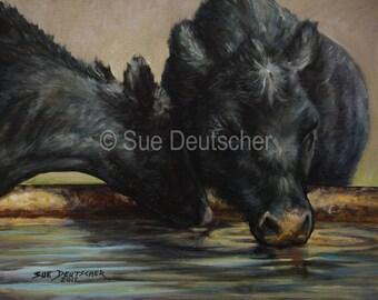 Black Angus cattle cow art print 11x14 print