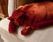 A Flame Red Velvet Cat