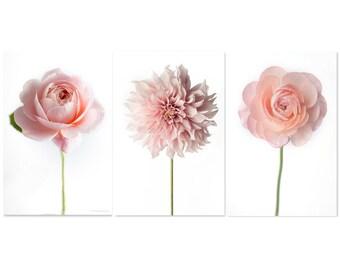 Flower Photographs - Ranunculus, Dahlia, Rose, Set of Three Floral Still Life Photos, Large Wall Art, Minimalist Home Decor,