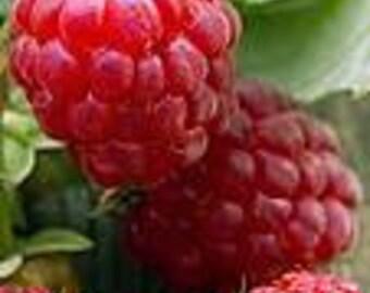 1 oz  Sun Ripened Raspberry Fragrance Oil