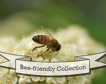 Bee Friendly Seed Collection - Six Packs of Organic Seed