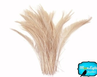 Peacock Feathers, 50 Pieces - IVORY Bleached Peacock Swords Cut Wholesale Feathers (bulk) : 3430