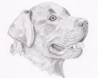 Labrador Retriever Signed Personalized Original Pencil Drawing Double Matted Print -Free Shipping- Desert Impressions