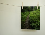 Nature Photography, Appalachian Trail, Home Decor, Wall Decor, Lush Forest   Fine Art Nature Print