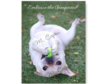 Embrace the Unexpected  - Fawn French Bulldog Puppy Cards - Set of 2Cards