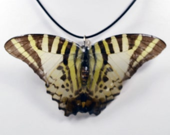 Real Butterfly Necklace - Five Bar Swordtail - Hand Cast Resin