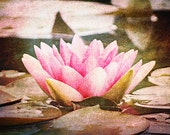Reserved for jmw6791 - Lotus Blossom 5x7 fine art photograph