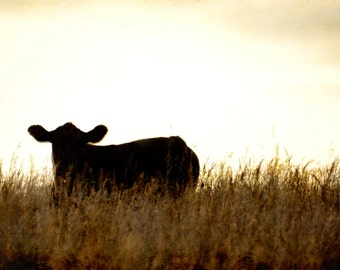 Cow in the sunset photography-animal cow photography-sunset -silhouette-(5 x 7 Original fine art photography prints) FREE Shipping