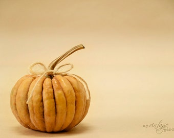 orange pumpkin-fall photography - autumn decor - autumn photo - pumpkin photo  (5 x 7 Original fine art photography prints) FREE Shipping