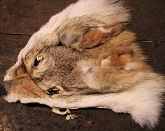 Real Tanned Coyote Face Mask