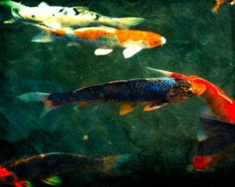 Fine Art Photography, Koi Fish, Nature Photography, Asian Wall Art, Orange and gold, fish in pond,Fine Art Print, Modern Home Decor, Aquatic