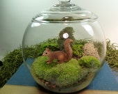 Small Covered Vase Terrarium, Squirrel, Moss.  Great for HOME or OFFICE. Nice Unusual Gift. Terrariums by mossterrariums on Etsy.