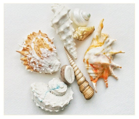 Edible Chocolate Filled Candy Sea Shells / 8 Piece Box Set - as seen in the New York Times, and featured on Martha Stewart American Made