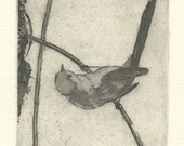 Original Etching of Bushtit