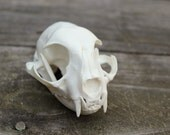 handmade replica domestic cat skull