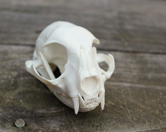 handmade replica domestic cat skull