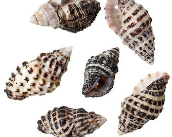 10 Shells Great Beach Jewelry Item Natural Shells with Pre Drilled Hole - BD638