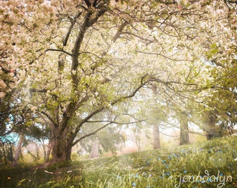 nature photography - tree print - nursery decor - fairy tale landscape photo