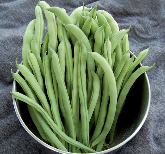 Organic Heirloom Kentucky Wonder Snap Pole Beans