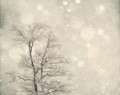 SALE 40% OFF Winter Art: First Snow 8x8 Fine Art Photography, Snow Bokeh, Tree Wall Art, Nature Wall Art, Nature Photography - MarianneLoMonaco