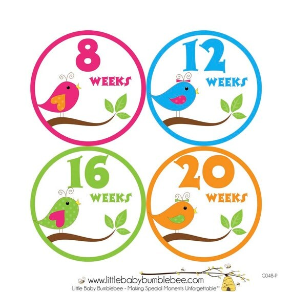 Pregnancy Stickers, Pregnancy Announcement, Weekly Stickers, Belly Stickers, Maternity Photo Prop, Belly Bump Stickers, Birds (G048-P)