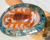 Scorpion HUGE Sterling Abalone shell Belt Buckle Gorgeous Unique Vintage