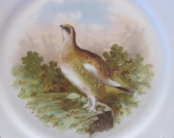antique bird plate, , gorgeous bavaria