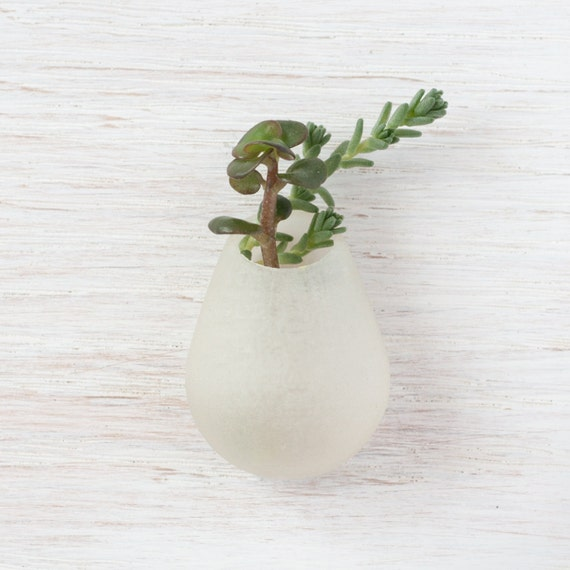 Wearable Planter No. 6, Lapel Pin, in Transparent